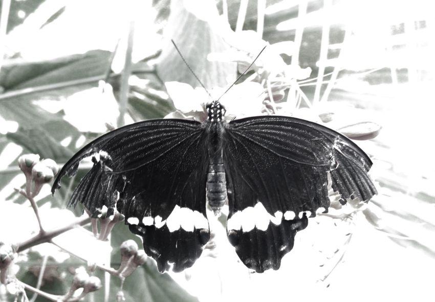 Tatty butterfly