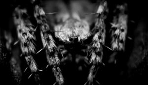 macro spider portrait