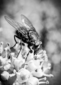 macro fly portrait