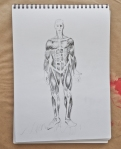 Anatomy drawing, main muscles that matter for drawing