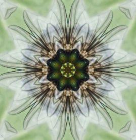 Fly pattern
