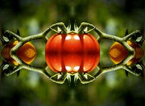 Tomato kaleidoscope 1