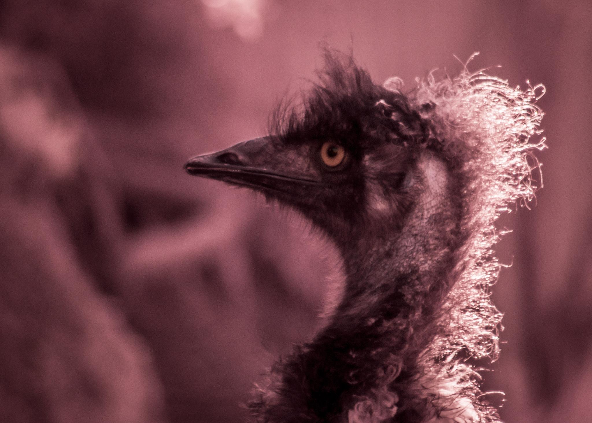 IR Emu