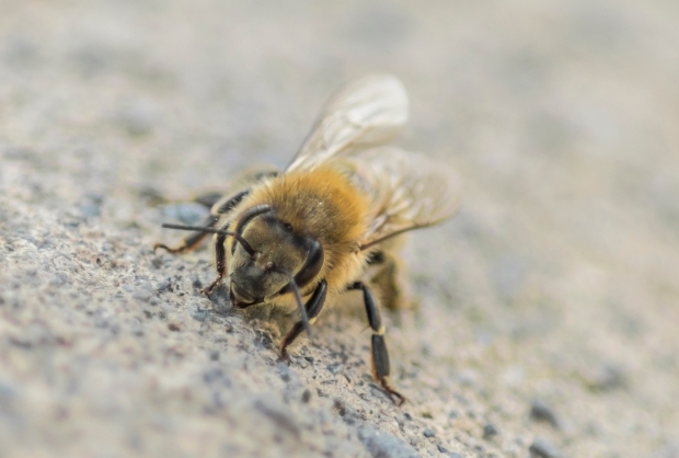 Bee, low on buzz