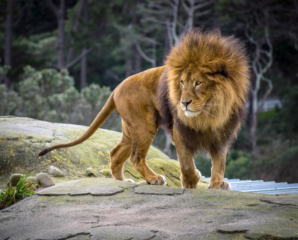 Newtown lion