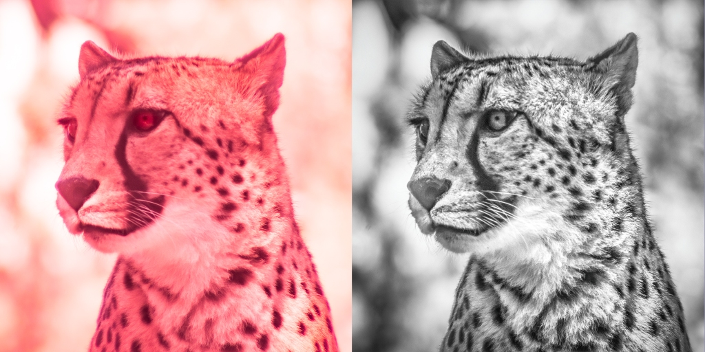 Cheetah IR