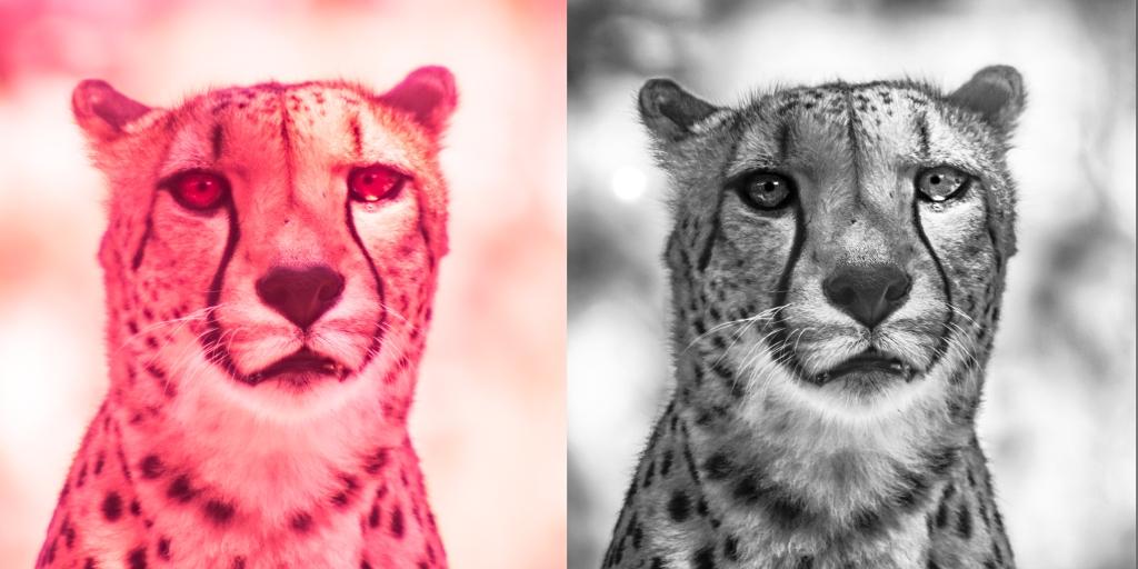 IR cheetah