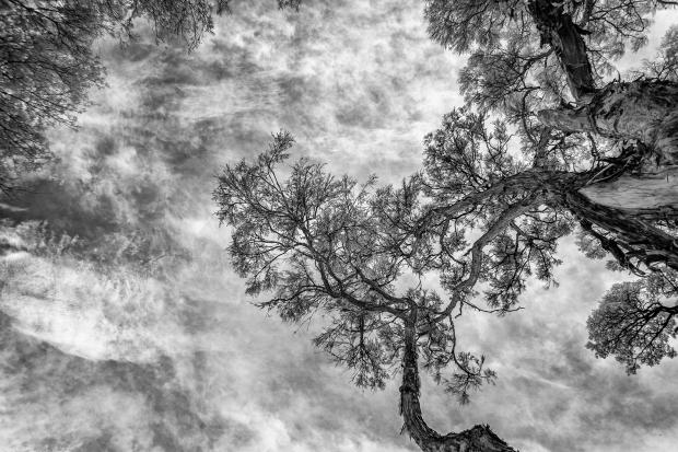 Trees IR camera