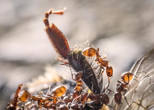 ants_dsc05750