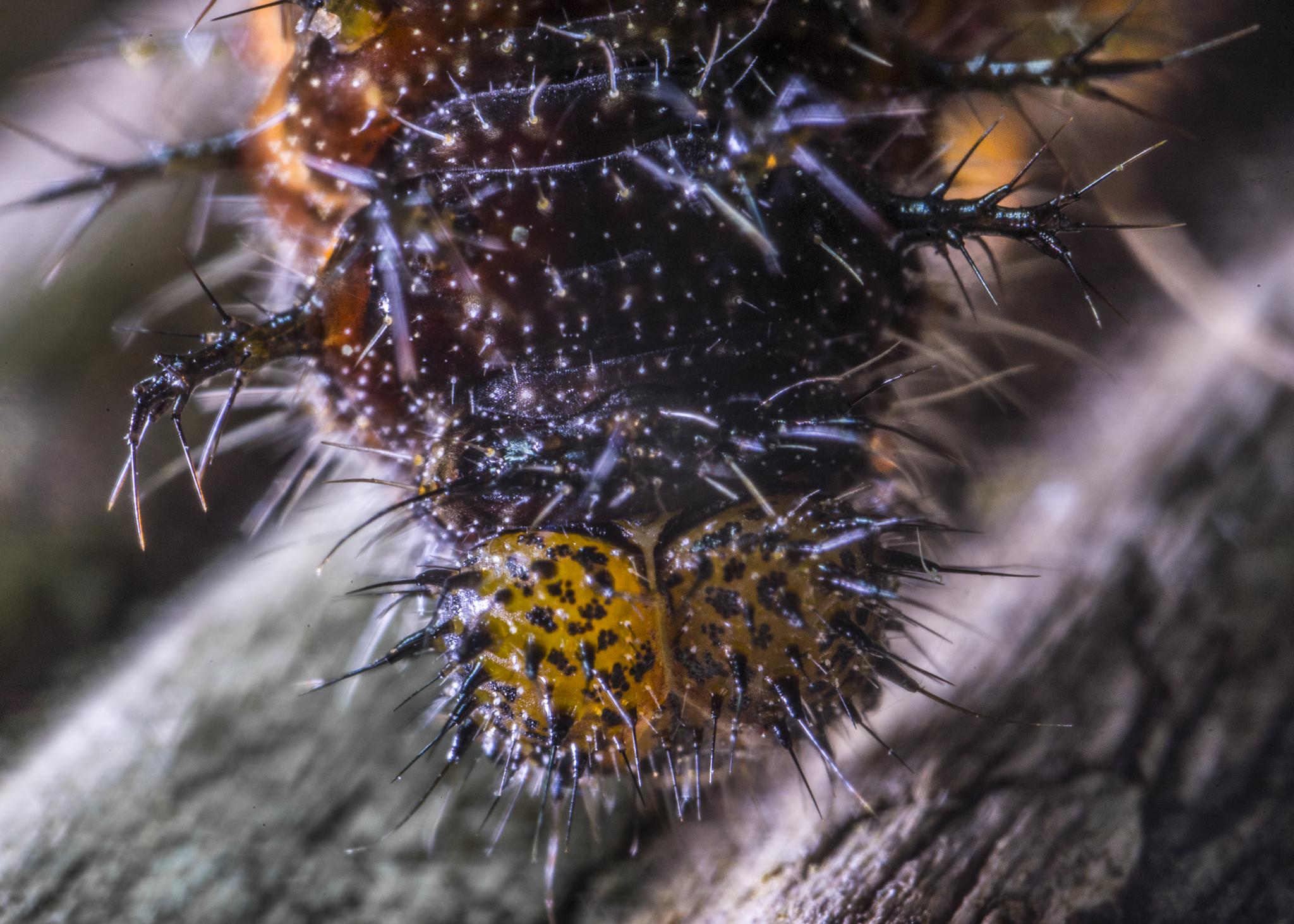 spikey caterpillar