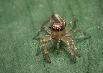 2017_spider_fb_DSC07515