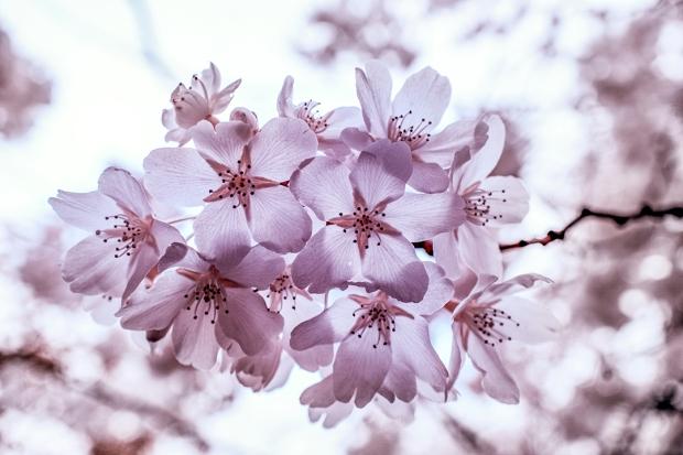 fb_blossomDSC08806