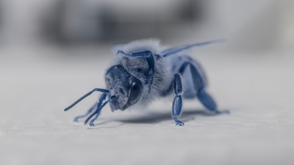 Bee yoga