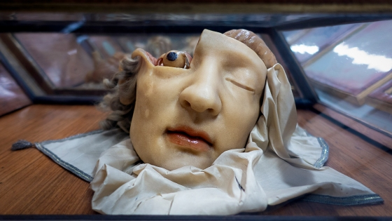 Wax anatomy model, calm face