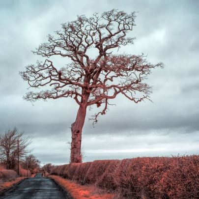 infrared isolated tree